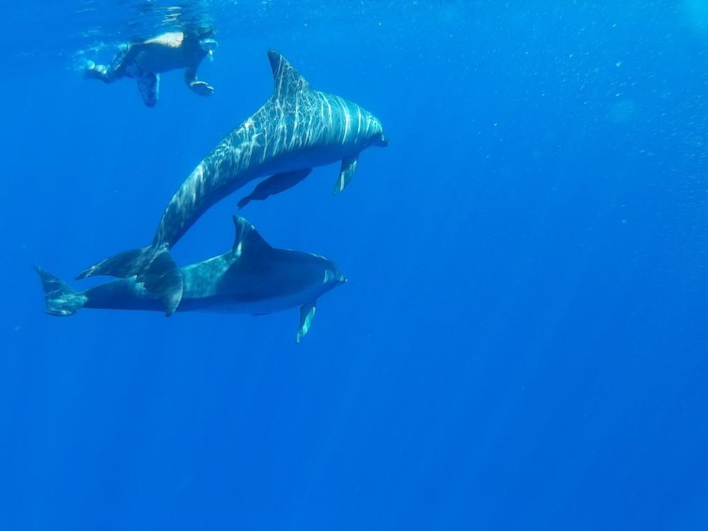小笠原でイルカと泳ぐ1